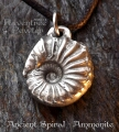 Ancient Spiral - Ammonite 09-AncientSpiralAmmonite