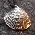 Venus Shell - Cross Barred 08-VenusShellCrossBarred
