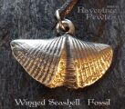 Winged Seashell and Fossil 09-WingedSeashell