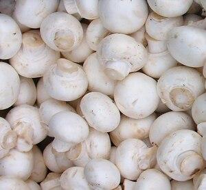 White Button (Agaricus bisporus) 8085