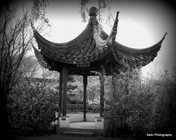 Chinese Garden #08-P4031360