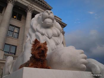 Leo the Lion #12-D2047366