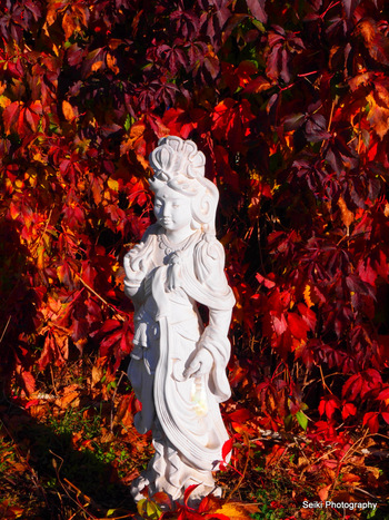 Quan Yin - red leaves #15-PA175975