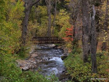 Utah Fall 18 #16-PA105864