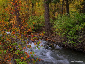 Utah Fall 19 #17-PA105853