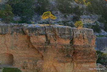Grand Canyon National Park -1 #24-PA012950
