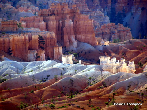 Bryce National Park - 3 P8158016