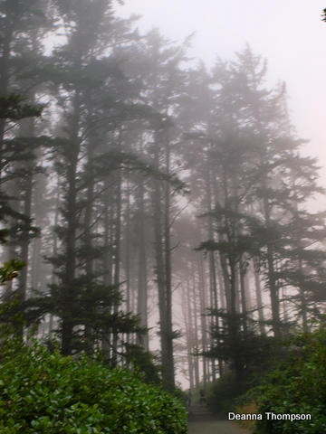 Cape Disappointment forest #P8165166