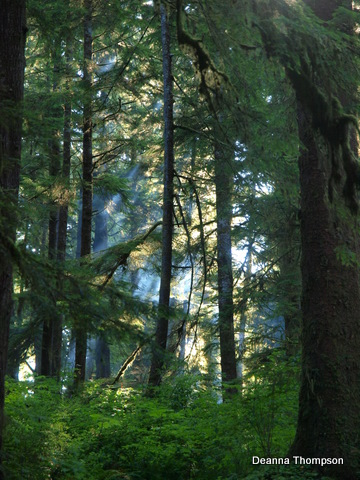 Cape Flattery Forest #P8104757