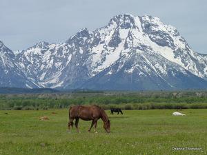 The Teton Range 1 with Horse #P1040036