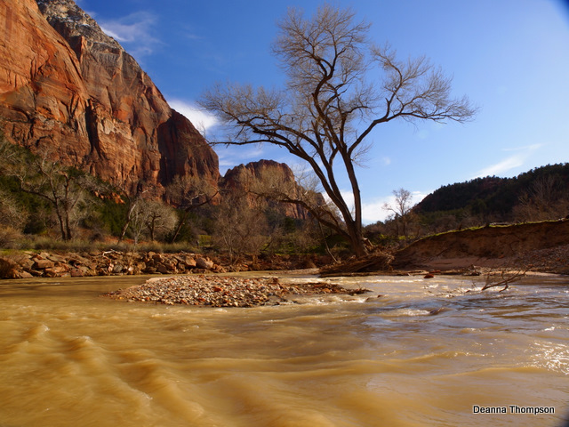 Virgin River in Zion #3152243