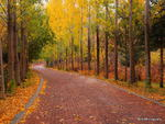 Fall in Sandy Utah 11-PA220837