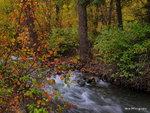 Utah Fall 19 17-PA105853