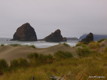 Oregon Coast - 12 20-P8205349
