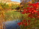 Utah Fall -13 23-D2240698