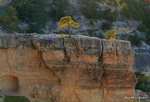 Grand Canyon National Park -1 24-PA012950