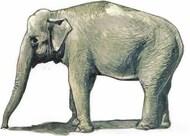CMK Czech Master  1/48 Asian Elephant (1 figure) CMKF48341