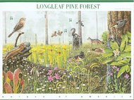 3611 34c Pine Forest F-VF Mint NH Self Adhesive Pane of 10 3611sh