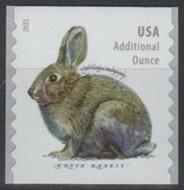 5545 20c Brush Rabbit Coil Mint   Single 5545nh