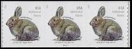 5545 20c Brush Rabbit Coil Mint  PNC of 3 5545pnc3