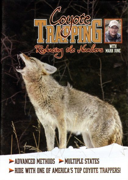 Coyote Trapping Reducing the Numbers - by Mark June #2525016
