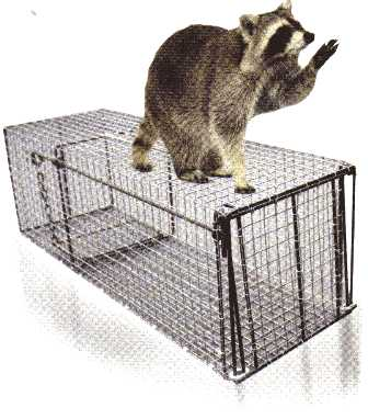 Northern Live Raccoon Trap 10x10x30 101030