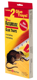 Victor® Rat Glue Tray 2 Pack #M174