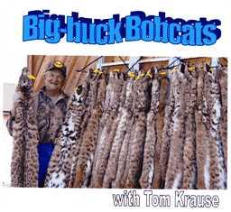 Big-buck Bobcats DVD bbbkrause